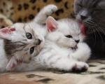 Родовспоможение домашним животным
