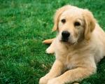 Проведение операций животным любой сложности в ветеринарной клинке «4 Лапы»