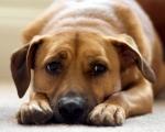 Оказание первой помощи домашним животным при отравлении